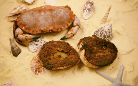 Un tourteau avec 2 crabes farcis.
