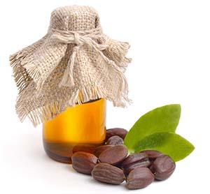 Feuilles de jojoba (Simmondsia chinensis), graines avec de l'huile.